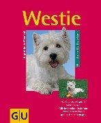 Westie: Quirliger West Highland White Terrier. Mit der richtigen Erziehung und viel Beschäftigung geht es ihn rundum gut