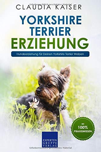 Yorkshire Terrier Erziehung: Hundeerziehung für Deinen Yorkshire Terrier Welpen